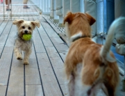 QM2 doggie friends - photo credit Simone Seckington