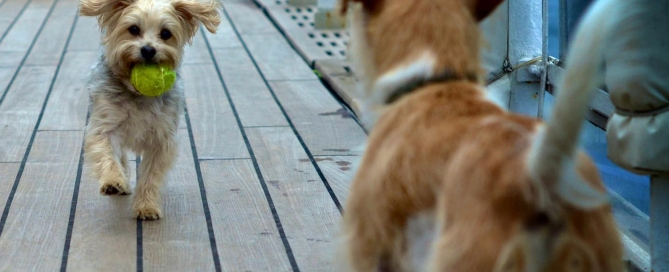 QM2 doggie friends - photo credit Simone Seckington